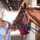 Equine Law – Inspection Prior to Purchasing a Horse